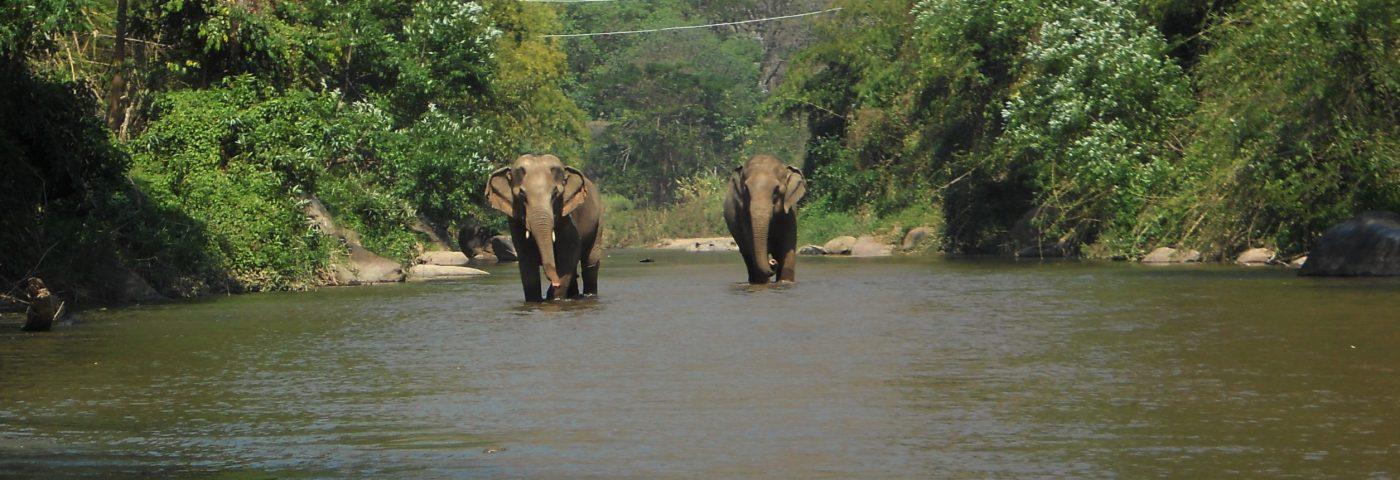Un día con elefantes en Tailandia.