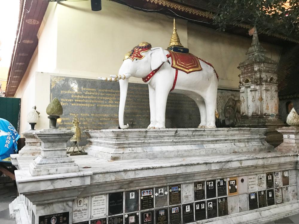 El elefante blanco de la leyenda en Doi Suthep