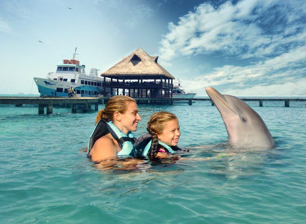 las mejores actividades en isla mujeres: nadar con delfines